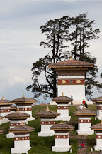 Cypress tree and the 108 chorten at Dochu La pass, Bhutan. - Photo #23184