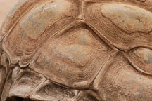 Close-up of galapagos tortoise shell. - Photo #5386