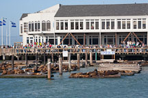 Sea lions at Pier 39. San Francisco, California. - Photo #22086