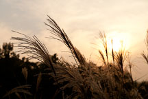 The sun sets over a field of wild grasses in Seoul's Olympic Park. - Photo #21687