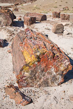Yellow, red and orange colors in petrified wood. Petrified Forest NP, Arizona. - Photo #17987