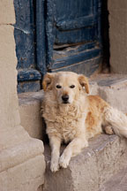 Dog resting in doorway. Cusco, Peru. - Photo #9589
