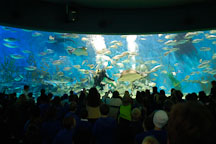 Crowd of visitors at Melbourne aquarium. Melbourne, Australia. - Photo #1709