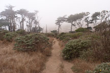 Path at Tomales point. Point Reyes National Seashore, California. - Photo #1793