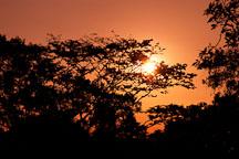 Sunset and the jungle canopy. Amazon. Peru. - Photo #8893