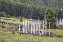 Prayer flags and horses. Phobjikha Valley, Bamboo. - Photo #23793