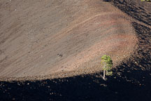 Pine tree growing on the curve of crater at Cinder Cone. Lassen NP, California. - Photo #27194