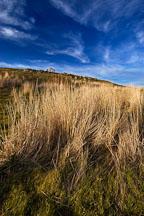 Brush at Russian Ridge Open Space Preserve. California. - Photo #3397