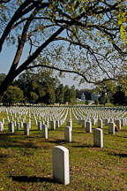 Rows of tombstones at Arlington National Cemetery. Arlington, Virginia, USA. - Photo #11097