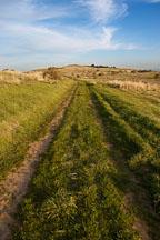 Tracks at Russian Ridge Open Space Preserve. California. - Photo #3398