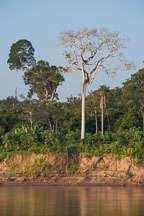 Bank of the Madre de Dios river. Amazon. Peru - Photo #8976