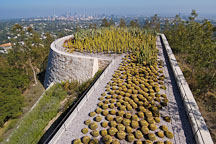 Cactus garden, Getty Center. Los Angeles, California, USA. - Photo #8174