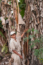 Don Anselmo shows his banana trees to visitors. Amazon, Peru. - Photo #8991