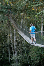 Walking a jungle canopy bridge. Amazon, Peru - Photo #8898