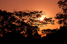 Sunset and the jungle canopy. Amazon. Peru. - Photo #8893